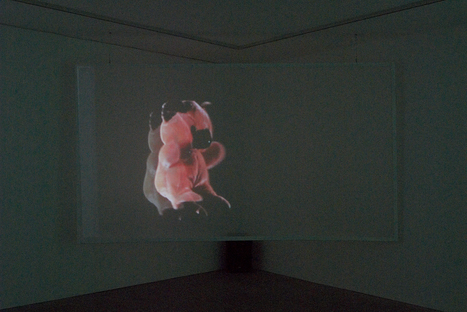 Installation view. Tornado Warning , Charles Atlas