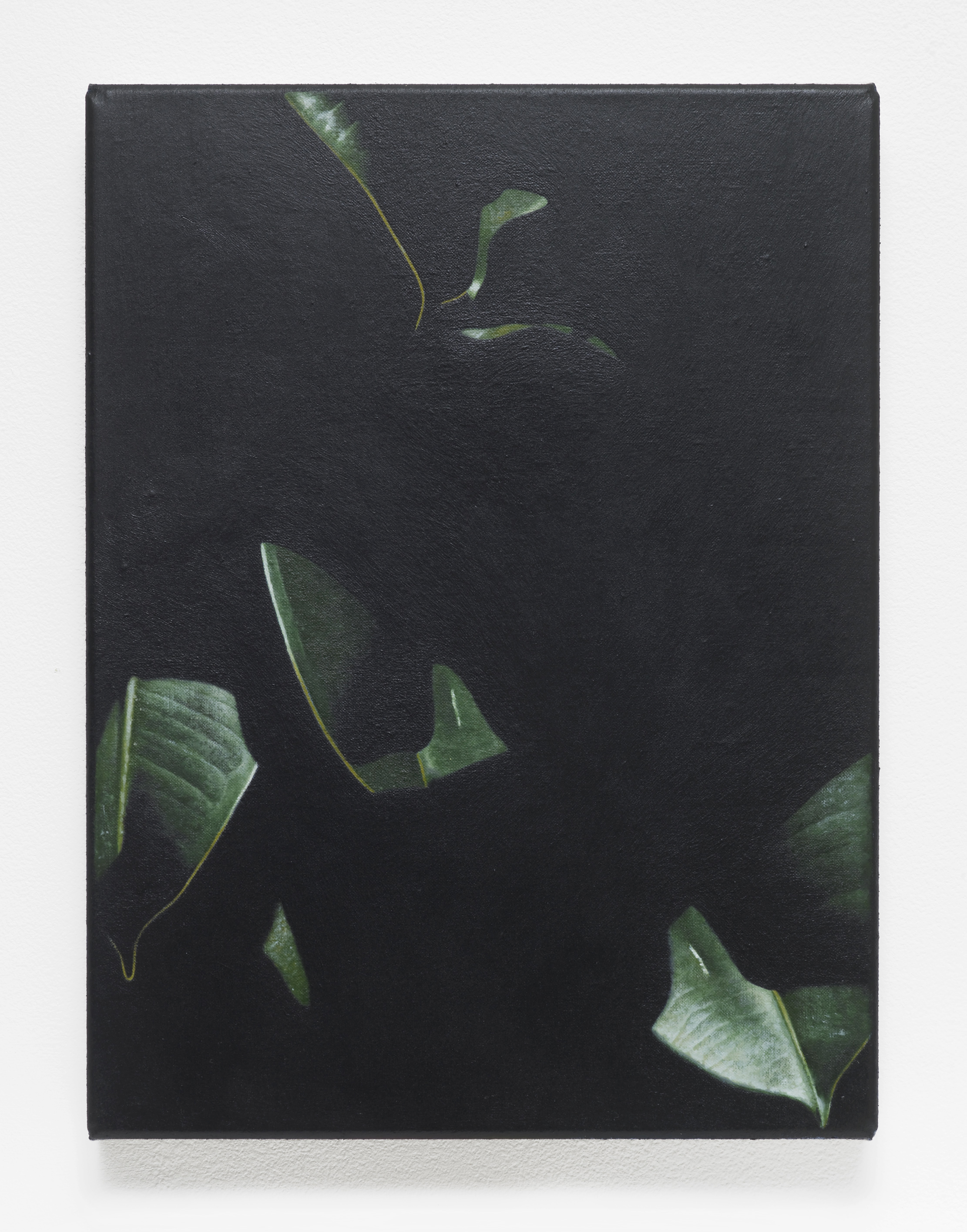 Rubber Plant, 2016, Oil on linen, 32 x 24 cm, 12 5/8 x 9 1/2 ins. False Friends Falsche Freunde , Oliver Osborne
